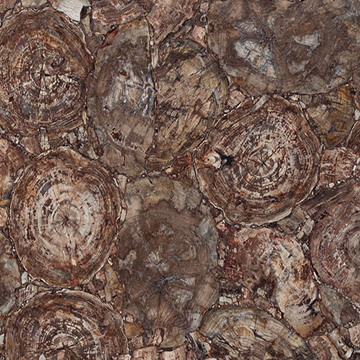 Concetto 8330 Petrified Wood